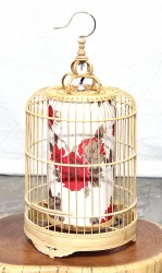 Product ID : 6925 - Category : Lighting - Product Name : Bamboo Birdcage Table Lamp